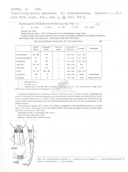 Neochromadora lateralis