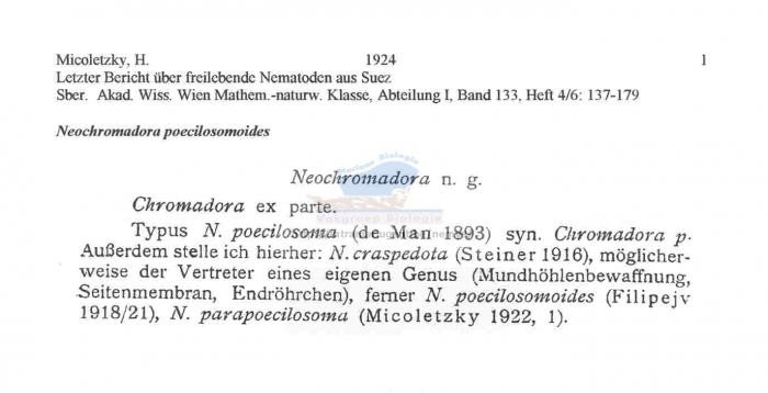 Neochromadora poecilosomoides