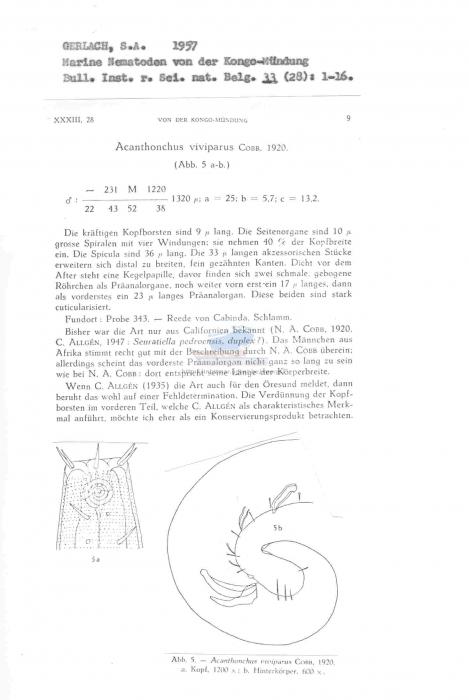Acanthonchus viviparus
