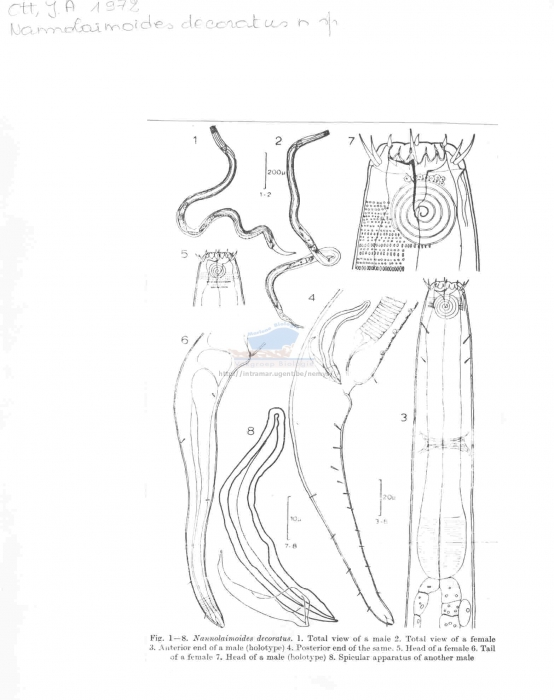 Nannolaimoides decoratus