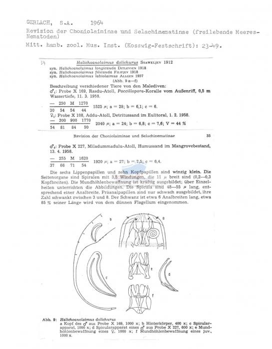 Halichoanolaimus dolichurus