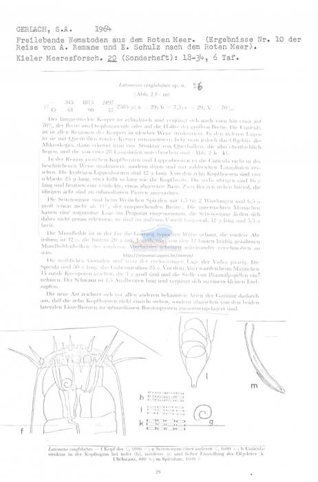 Latronema conglobatum