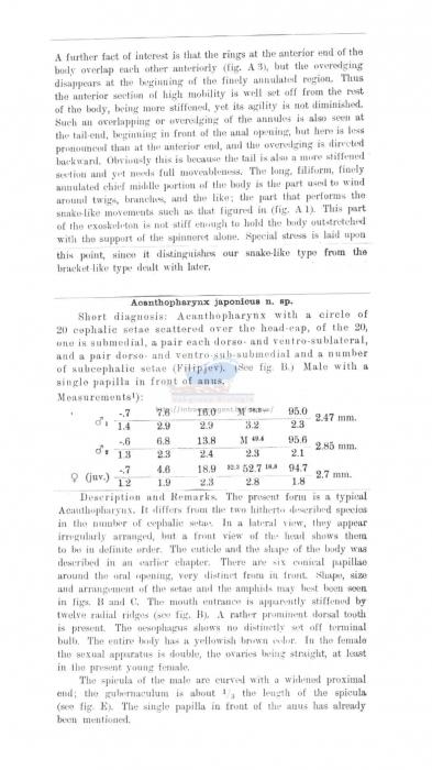 Acanthopharynx japonica
