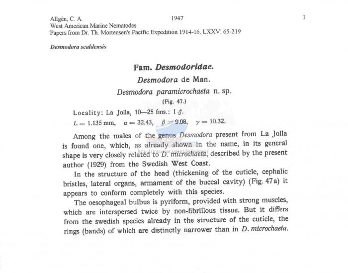 Desmodora scaldensis