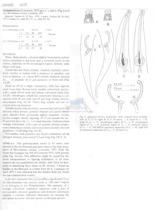 Aponema torosus