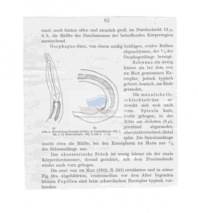 Calomicrolaimus honestus