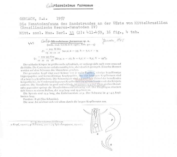 Calomicrolaimus formosus