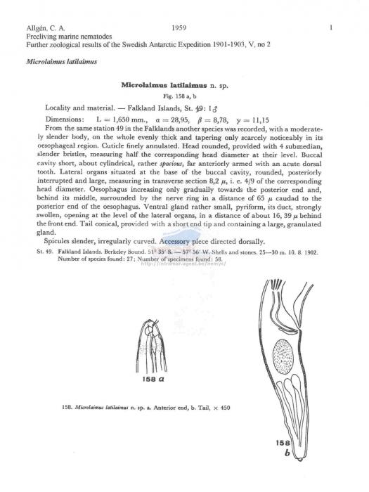 Microlaimus latilaimus