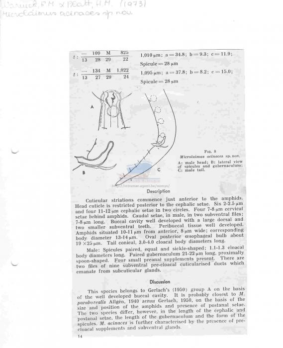 Microlaimus acinaces