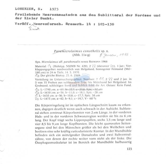 Microlaimus conothelis