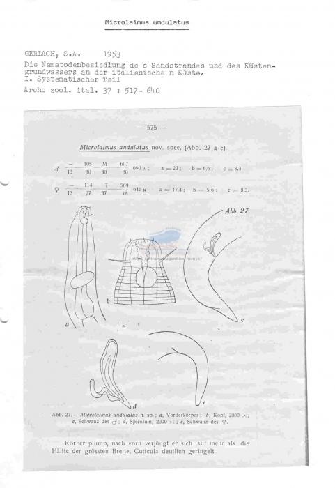 Microlaimus undulatus