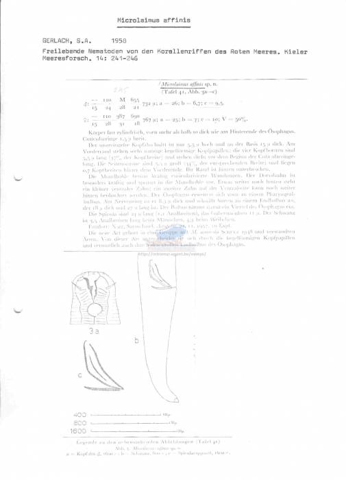 Microlaimus affinis