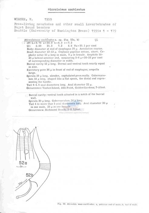 Microlaimus cochleatus