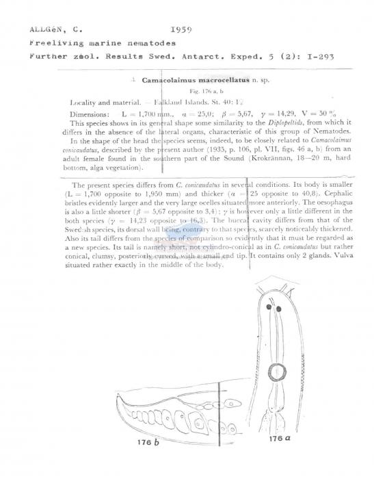 Camacolaimus macrocellatus