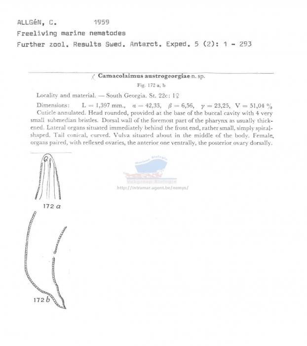 Camacolaimus austrogeorgiae