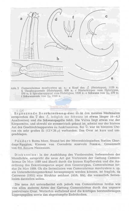 Camacolaimus monhystera