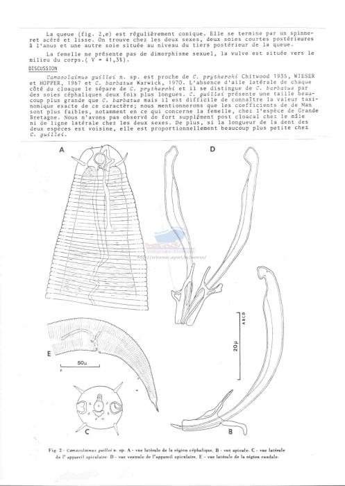 Camacolaimus guillei