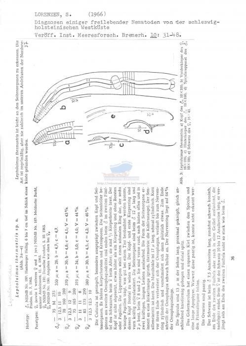 Leptolaimoides thermastris