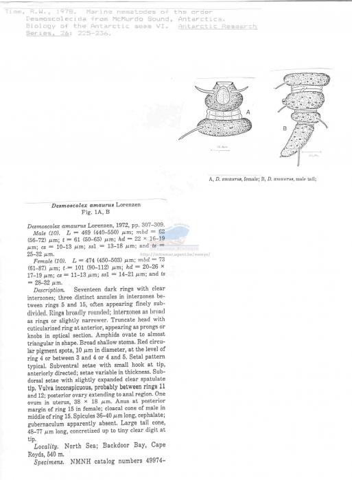 Desmoscolex amaurus