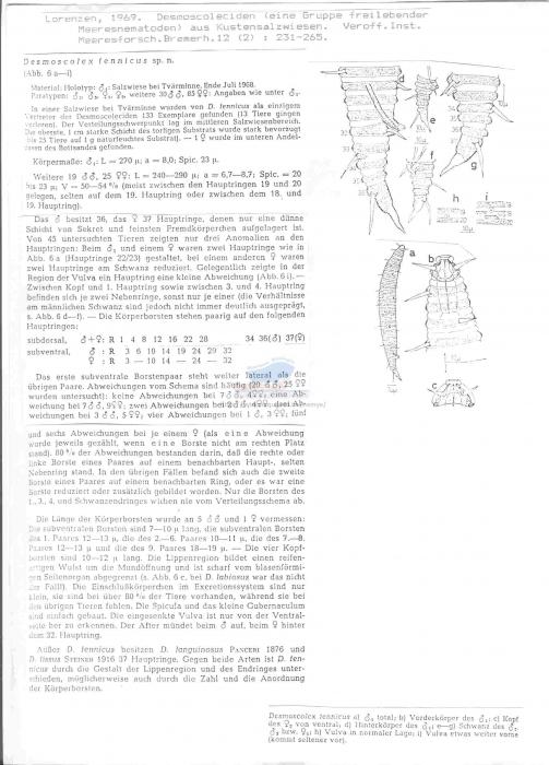 Desmoscolex fennicus