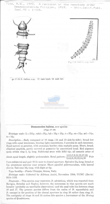 Desmoscolex italicus