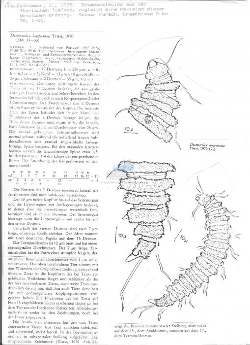 Desmoscolex longisetosus