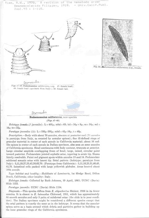 Desmoscolex californicus