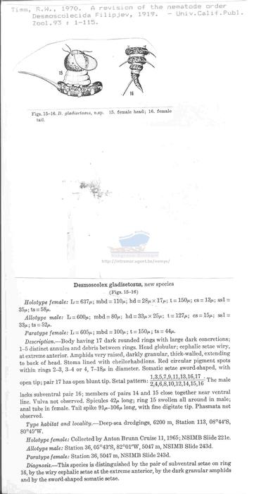 Desmoscolex gladisetosus