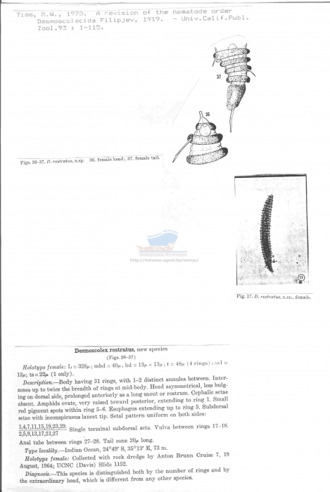 Desmoscolex rostratus