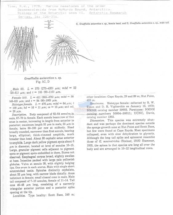 Greeffiella antarctica