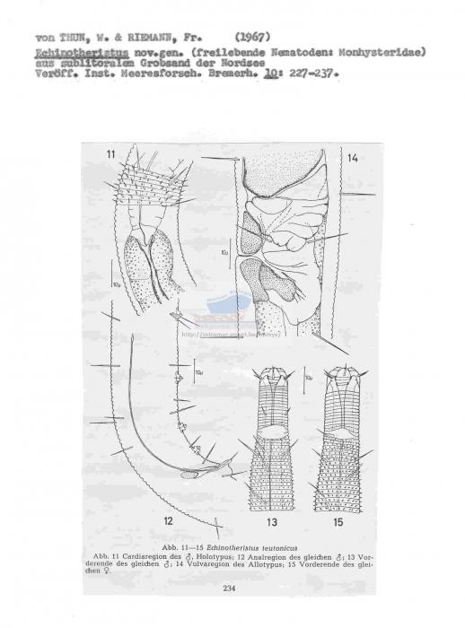 Echinotheristus cimbricus