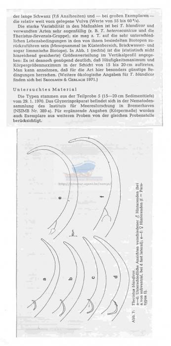 Theristus blandicor