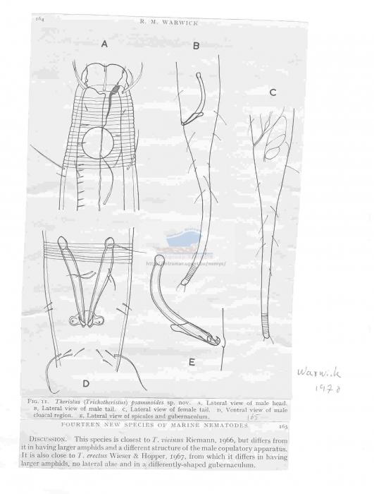 Trichotheristus psammoides