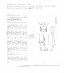 Xenolaimus striatus