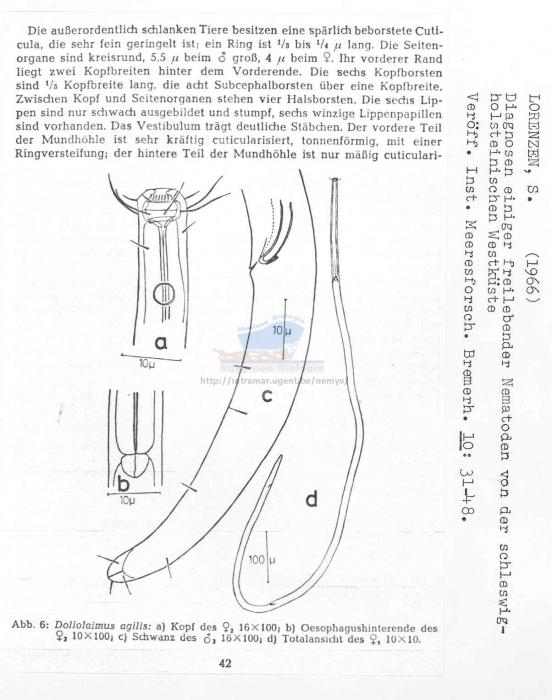 Doliolaimus agilis