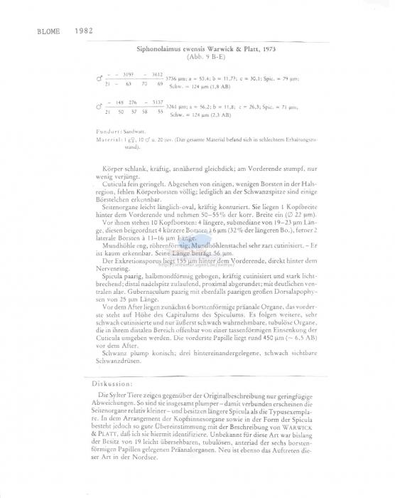 Siphonolaimus ewensis