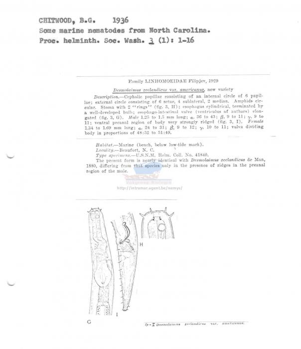 Desmolaimus zeelandicus