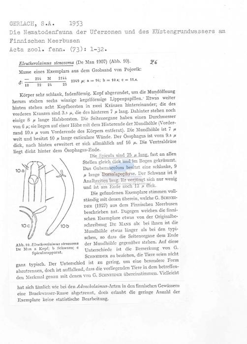 Eleutherolaimus stenosoma