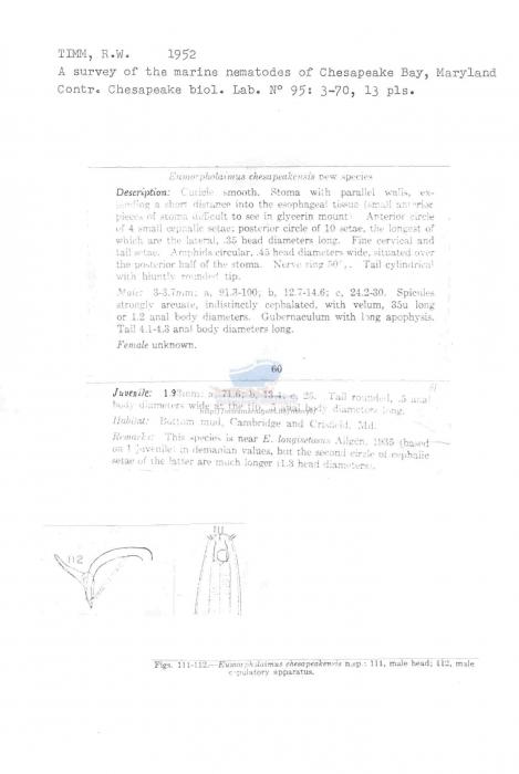 Eumorpholaimus chesapeakensis