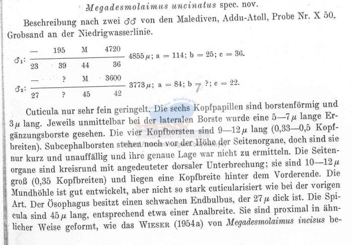 Megadesmolaimus uncinatus