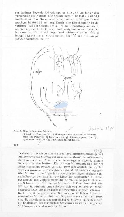 Metalinhomoeus biformis
