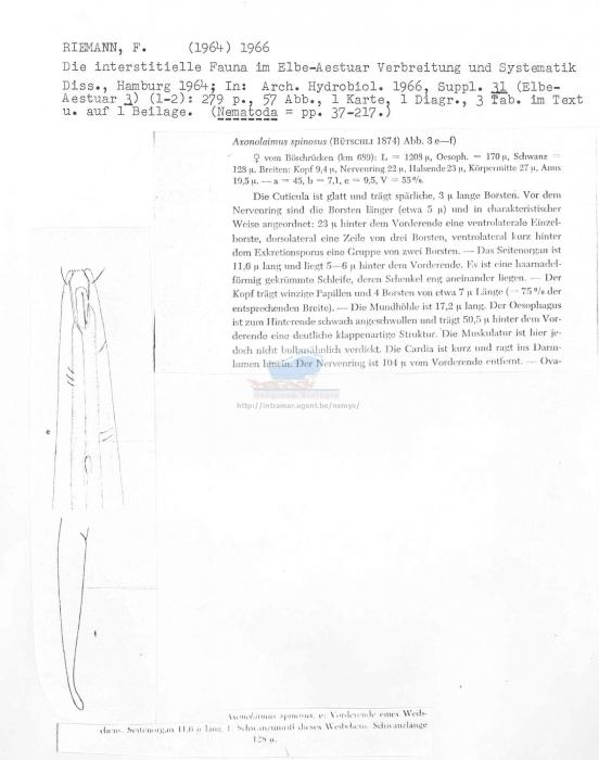 Axonolaimus spinosus