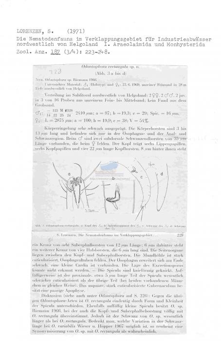 Odontophora rectangula