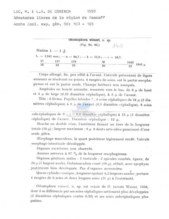 Odontophora wieseri