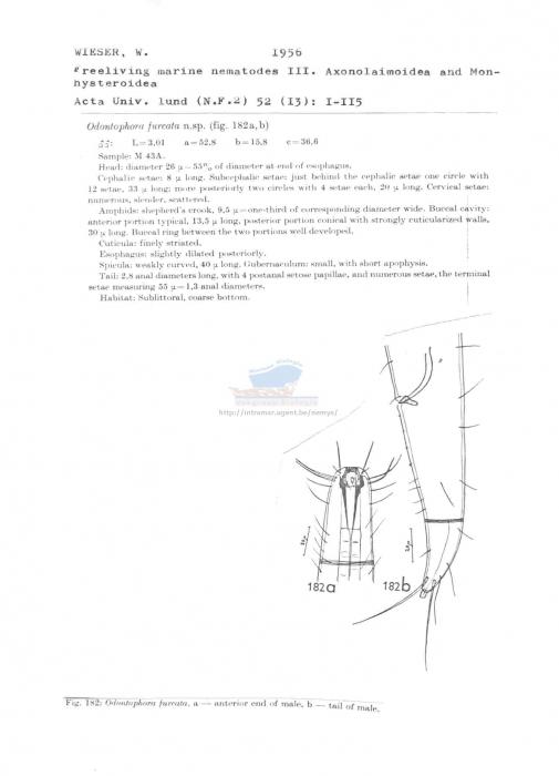Odontophora furcata