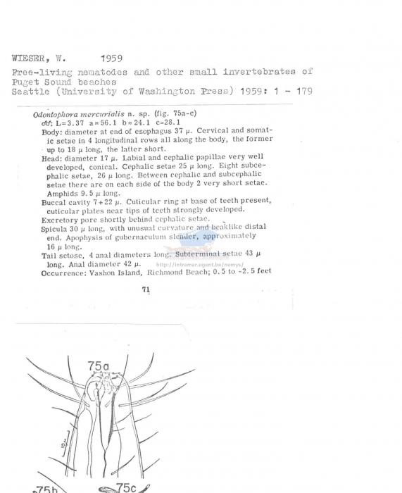 Odontophora mercurialis