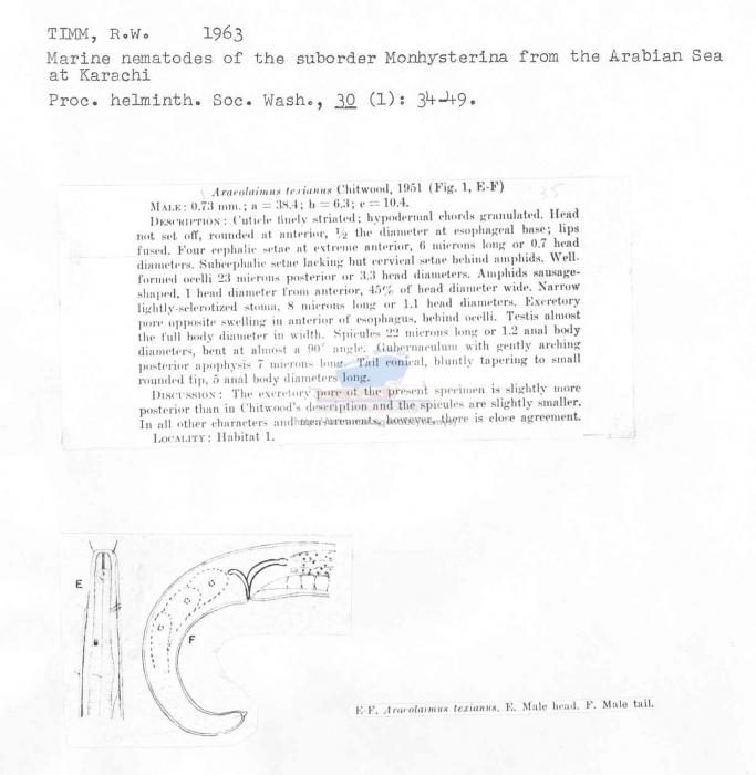 Araeolaimus texianus