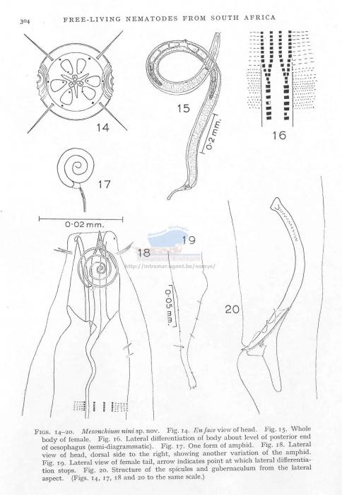 Dorylaimopsis nini