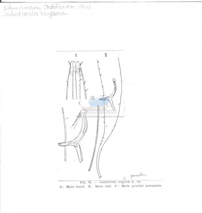 Sabatieria praedatrix