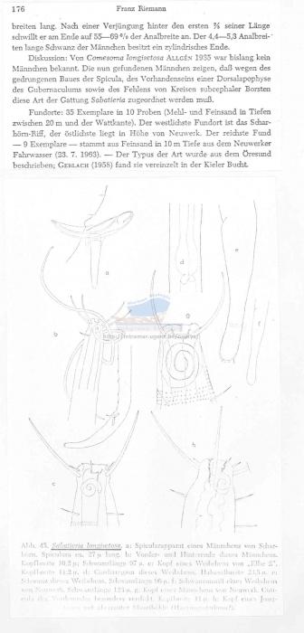 Sabatieria longispinosa